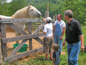 feeding_willie_draft_horse