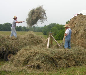 the_Jerrys_stacking_hay